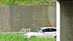 / E17 - 19 juni 2016 (Ferdinand 'Ferre' Feys) Tags: streetart graffiti belgium belgique belgi urbanart graff ghent gent gand graffitiart artdelarue urbanarte