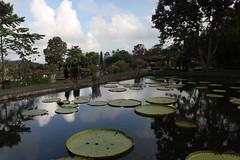 Tirta Gangga Water Palace (Timmok) Tags: water palace tirta gangga