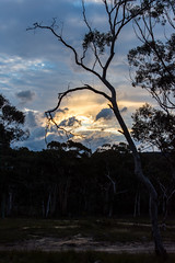 Megalong Valley Sun Set (G. Starr) Tags: nikon d7200 sunset dusk cloud clouds bush australia katoomba megalong nsw