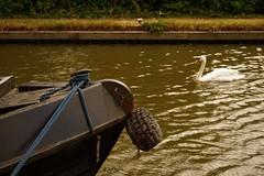 1295-17L (Lozarithm) Tags: aylesbury bucks canals guc pentaxzoom k1 28105 hdpdfa28105mmf3556eddcwr
