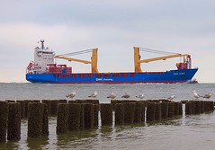 BBC Kibo (arjenvanveldhuisen) Tags: ship walcheren zeeland scheepvaart seagulls zeemeeuwen zoutelande