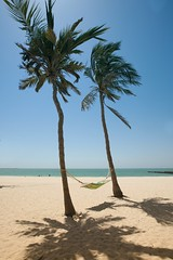 Vacation Dreams (HassanGZ) Tags: blue shadow vacation sky sun beach dubai palmtree hammock