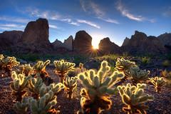 Kofa-8221_2_3_4_5_tonemapped (Michael-Wilson) Tags: sunset arizona cactus mountains sunrise az ocotillo cholla kofa michaelwilson kofanationalwildliferefuge