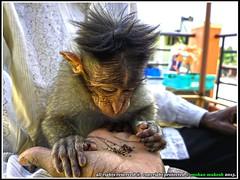 ramu (mohan mukesh) Tags: monkey manju aldur