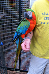 Key West (Florida) Trip, November 2014 3087Ri 4x6 (edgarandron - Busy!) Tags: bird birds keys florida parrot keywest cockatoo macaw floridakeys nancyforresterssecretgarden