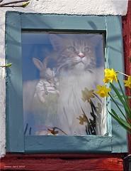 Ein schönes Osterfest für alle meine Flickr Freunde - Happy Easter to all my flickr friends