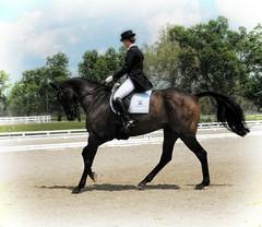 Warm up ring- warmblood (Rick@Bristol) Tags: horse ky kentuckyhorsepark warmbloods