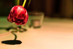 Heads up! (-DerFranke-) Tags: shadow party flower field canon germany deutschland bokeh decoration celebration blume schatten depth feier deko dekoration tiefenschrfe tischschmuck eos6d ef24105f4l