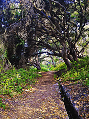 The Path - La Purisima Mission (CaptSpaulding) Tags: california trees nature landscape path mission centralcoast hdr lompoc lapurisima galaxys4