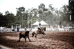 É dez....é maragataa.... (mauroheinrich) Tags: costumes brasil nikon cavalos nikkor festa nikondigital gauchos ctg riograndedosul cultura mtg boi tradicionalismo riogrande gaucho rodeio laço 28300 cavaleiros gaúcho tradição gaúchos d610 gauchismo tradições nikonians campeiros nikonprofessional fotógrafosbrasileiros tirodelaço fotógrafosgaúchos festacampeira 28300vr laçadores fecars fotógrafosdosul nikonword mauroheinrich laçoseleção