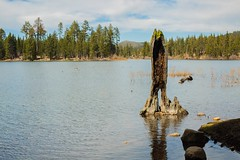 Baumstamm_im_Wasser (Photo-Jonny) Tags: california park lake america national redding lassen manzanita