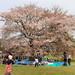 IMG_0767_769 国営昭和記念公園 みんなの原っぱ HDR