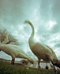 Around Castle Semple (wheehamx) Tags: camera 35mm pinhole frame half