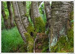 20160526-054_Verschiedenes.jpg (schmilar77) Tags: jahreszeit natur pflanzen landschaft wald baum frhling baumstamm bildbeschreibung