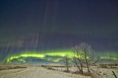 Moonlight Aurora (John Andersen (JPAndersen images)) Tags: trees winter sky snow field night fence alberta aurora northernlights stubble