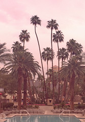palm trees vintage pink effect (Aqua and Coral Imagery) Tags: pink trees vacation beach pool hotel paradise resort filter effect