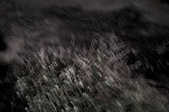 powlet river estuary xvi (Kenneth Rowe) Tags: multipleexposures powlettriver estuary d7000 longexposure riverbank