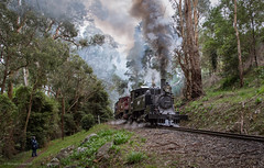 Double Delight (michaelgreenhill) Tags: pbr autumn victoria dandenongranges smoke australia trains hills steam selby train doubleheader cold local walk overcast exhaust puffingbilly belgrave au doubleheaded double