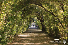 I giardini di Boboli, Firenze (filippi antonio) Tags: trees italy verde green nature alberi garden florence italia natura tuscany firenze toscana boboli giardini viale passaggio