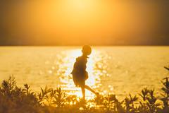 黄金色に輝く (のの♪) Tags: sunset lakeside 夕陽 dd 夕日 dollfiedream