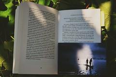 Letture sotto l'uva fragola. (elisabettaurso) Tags: italy book countryside wine reader libro campagna piemonte grapes uva salgado bauman sociologia liquidlove amoreliquido