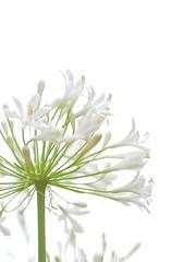 """""""  """" (Polotaro) Tags: flower nature pen garden olympus    6    mzuikodigital45mmf18 epm2"""