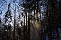 Sunshine snow (Aah-Yeah) Tags: schnee winter sun sunlight snow sunshine forest bayern sunrays sonne wald sonnenstrahlen sunbeams sonnenschein achental sonnenlicht chiemgau