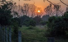 Sonnenaufgang (Mae Rim, Thailand)