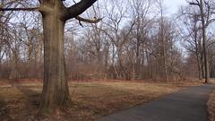 Brookdale Park, Magic Edge (Rick Wright, Victor Emanuel Nature Tours) Tags: newjersey finches april purplefinch fringillidae carpodacus fringillids haemorhous