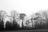 Tayport Trees