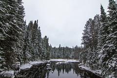 Boreal Winter (awaketoadream) Tags: park winter snow ontario canada pine river fir algonquin spruce madawaska boreal provincial