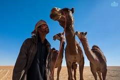 (Shyjith Kannur Photography) Tags: portrait uae culture camel relationship arab aldhafra aldhafracamelfestival