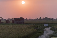 Fire-starter... (Saad Sarfraz Sheikh) Tags: sunset countryside energy lahore fuel jahman bedian