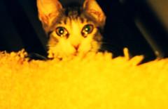 Baby Bella (Robert S. Photography) Tags: 2003 cats pets analog kodak scanned bella