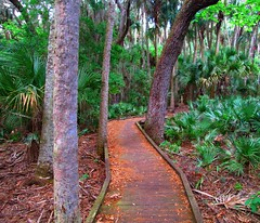 Hammock Trails, Florida (Let's go outside and play!) Tags: trees forest woods florida hiking palmtrees trail tropical