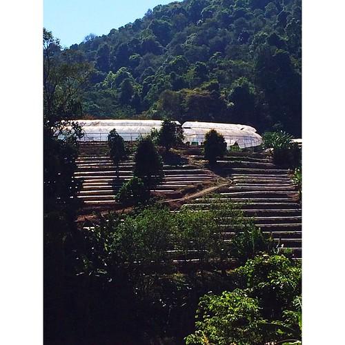 _ ง ด ง า ม ย า ม เ ช้ า _ โครงการหลวงหนองหอย ม่อนแจ่ม แม่ริม เชียงใหม่  Goodmorning from Chiang Mai Thailand