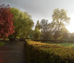 rain and sun, clissold park n16, 2016-05-18_19-49-41 (tributory) Tags: park trees light red sky storm reflection green london nature water grass rain weather yellow publicspace train gold hedge raindrops dreamy hackney fading hazy bushes tfl innerlondon