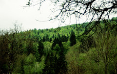 Greens (elisabettaroncoroni) Tags: wood cold film landscape pentax cloudy kodak pentaxart