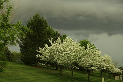 5D3_3781 (Saad M.N.B.) Tags: plant storm tree rain weather clouds canon outdoor canon5d nwn