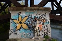 'The Wall' i. (miranda.valenti12) Tags: bridge portrait flower color water colors wall river graffiti posing it x sunflower be dreads let xzavier