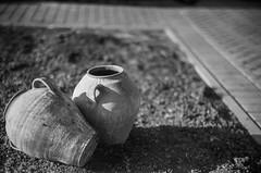 stillnature (gcond) Tags: bw film nature monochrome 35mm blackwhite dof bokeh outdoor grain sunny rangefinder apx100 vintagecamera agfa rodinal analogphotography moldova vilage paralax selfdeveloped filmphotography kiev4a jupiter3 shootfilm rangefindercamera filmisnotdead r09 kievcontax sovietcamera sovietlens allmanual singerei theanalogueproject buyfilmnotmegapixels