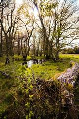 Scotland Day Three (Crazyideas95) Tags: trip lake forest scotland highlands pond log branch sunny loch lomond luss
