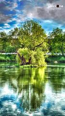 Reflections (Jean McLane) Tags: trees verde green nature colors reflections landscape couleurs vert colores arbres reflets hdr reflejos abrdoles
