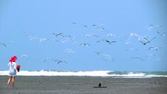 Birds (bladek1016) Tags: travel viaje sea beach birds landscape mar travels venezuela playa paisaje aves viajes coro