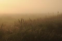 Sonnenaufgang in der Ossenvenne; Norderstapel, Stapelholm (7) (Chironius) Tags: stapelholm norderstapel schleswigholstein deutschland germany allemagne alemania germania    ogie pomie szlezwigholsztyn niemcy pomienie morgendmmerung sonnenaufgang morgengrauen  morgen morning dawn sunrise matin aube mattina alba ochtend dageraad zonsopgang   amanecer morgens dmmerung nebel fog brouillard niebla