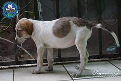 DSC08191 (OrgNicAmb) Tags: dogs perros nicaragua refugio mascotas masaya peluditos recataditos casahogarlucito orgnicamb