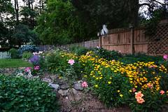 Linda's Garden (Bruce Livingston) Tags: flowers fence garden newjersey nj ourgarden hff warrencounty