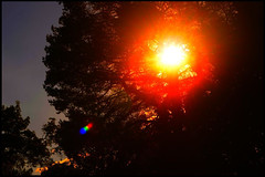 Red Sun (Josh Rokman) Tags: sunset sky nikond7000 orange red nature outdoors tree treesun sun brightsun