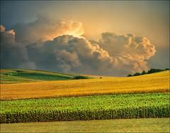 summer field (Katarina 2353) Tags: film landscape nikon europe serbia vojvodina srbija katarinastefanovic katarina2353