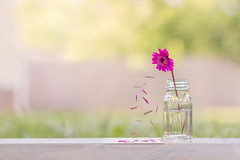 Falling to Pieces (Elizabeth_211) Tags: pink summer stilllife flower green nature floral bokeh